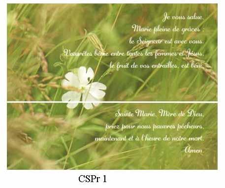 CSPr1